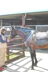 Image of a painted horse